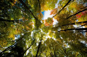Colorful Autumnal Canopy